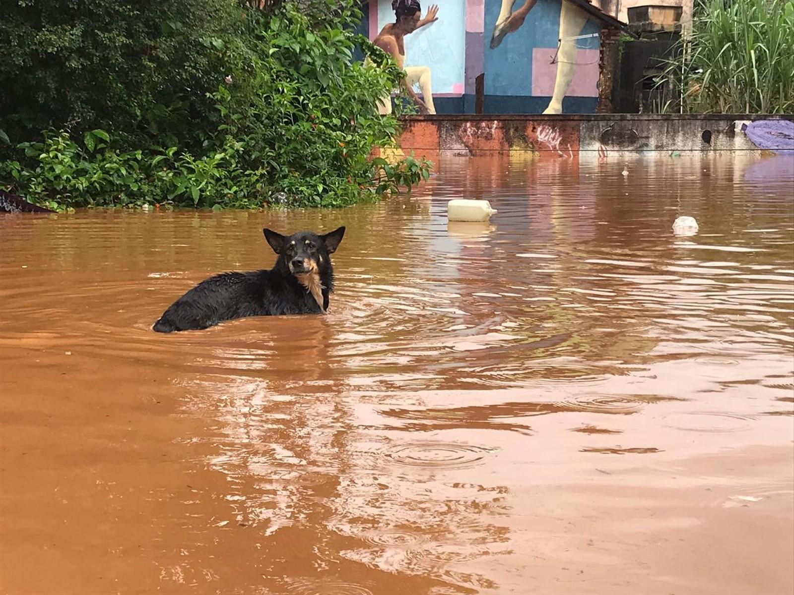 bh recebe doações para cães e gatos prejudicados pelas chuvas