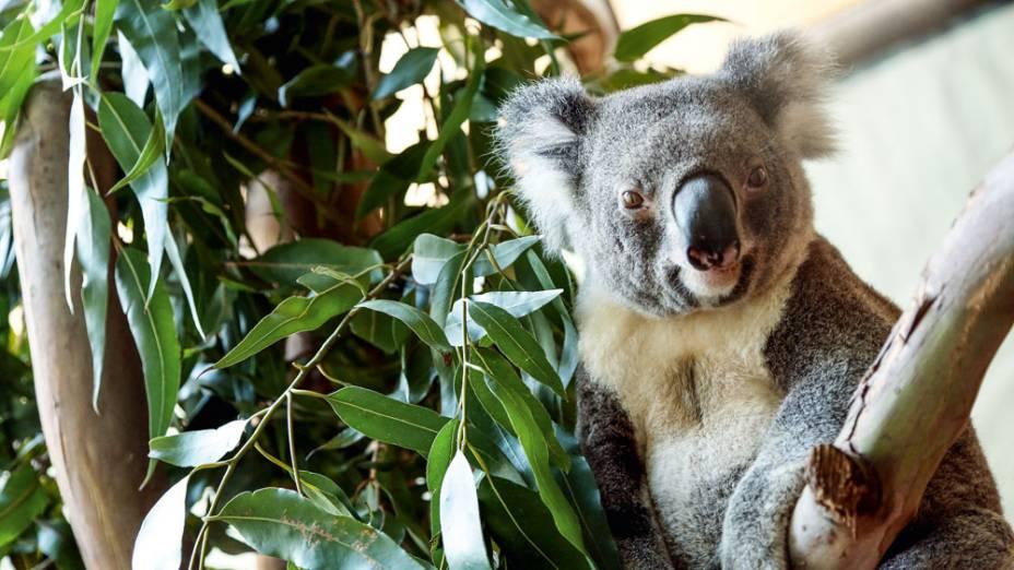 coala e cangurus podem ser vistos em aquário de SP
