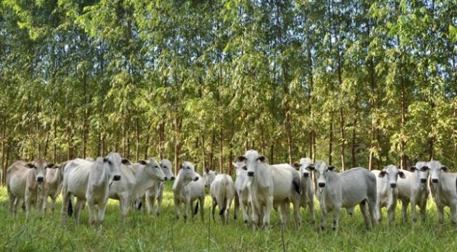 ms sediará congresso mundial de sistemas de integração pecuária