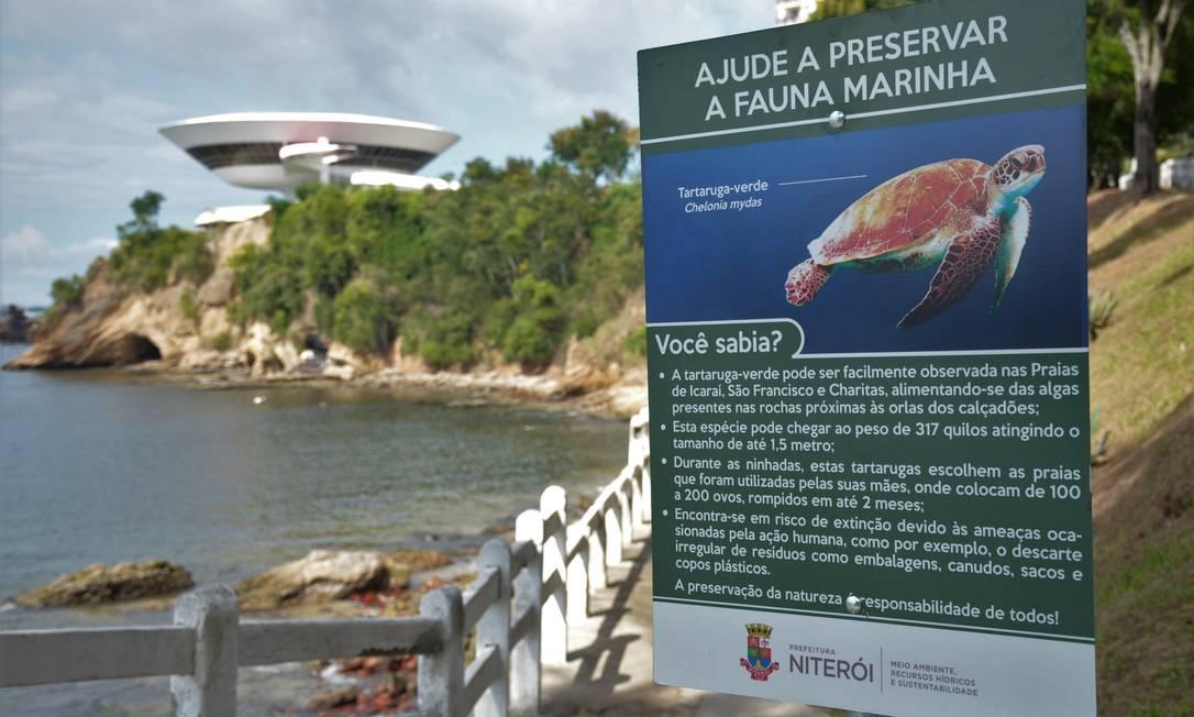 fauna marinha em niterói praias locais ganham placas de preservação